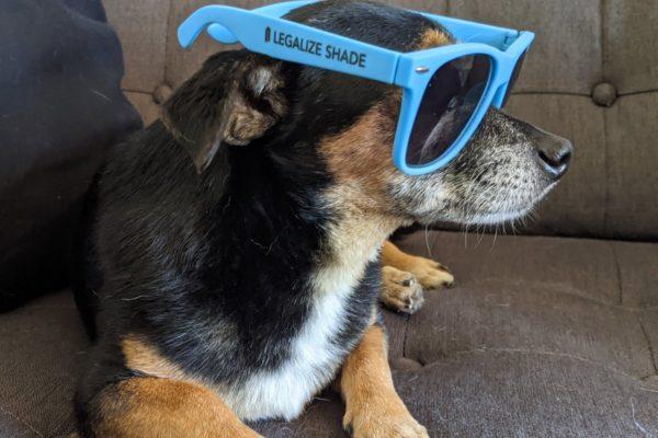 Legalize Shade Sunglasses